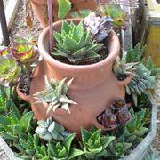 Vasi per piante grasse vasi for Vasi resina economici