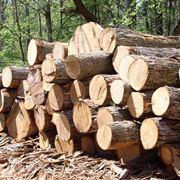 lavori in legno fai da te